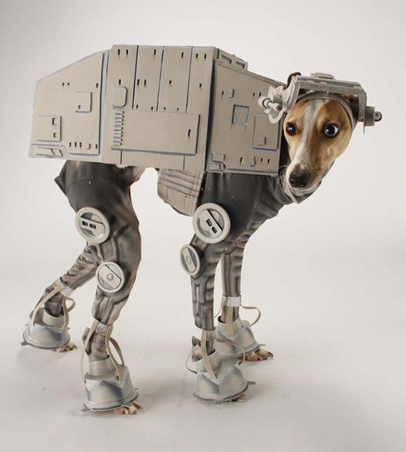 disfraz-mascota6