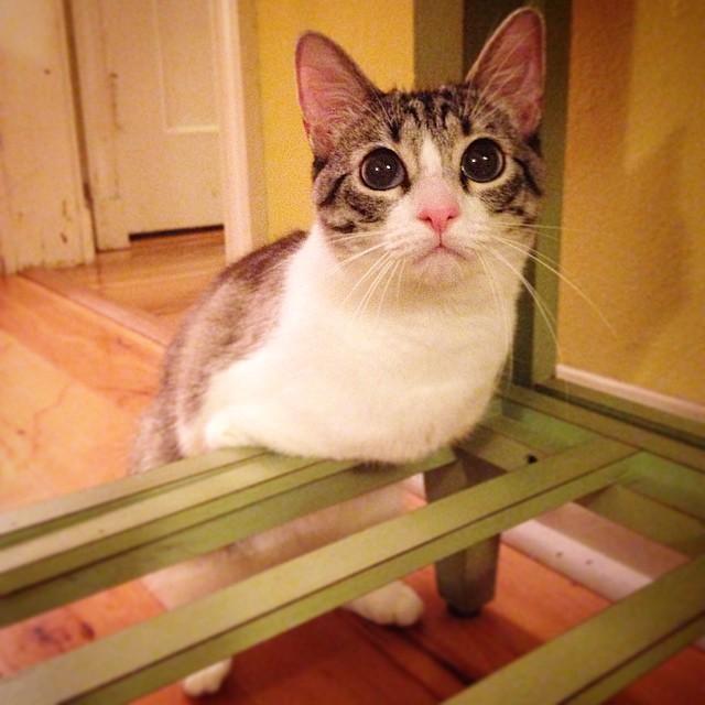 gato-2-patas-2