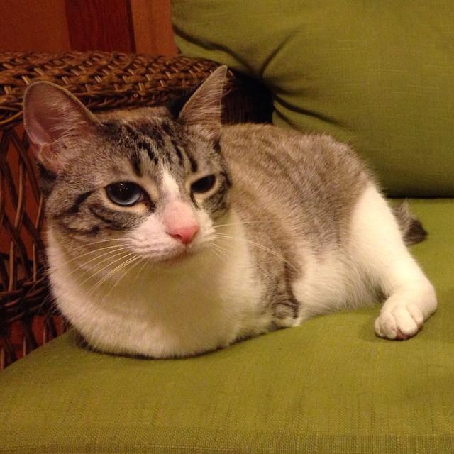 gato-2-patas-6