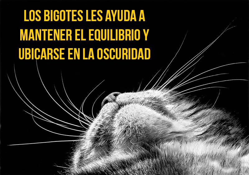 gato-curiosidad11