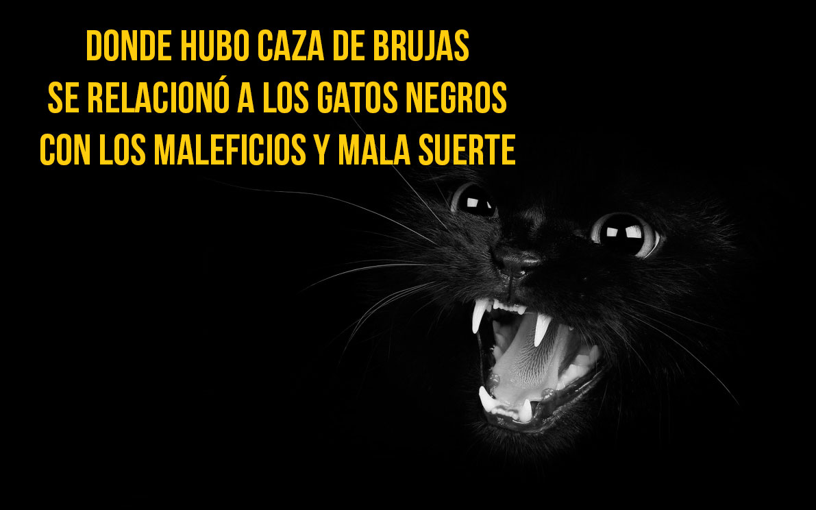 gato-curiosidad14