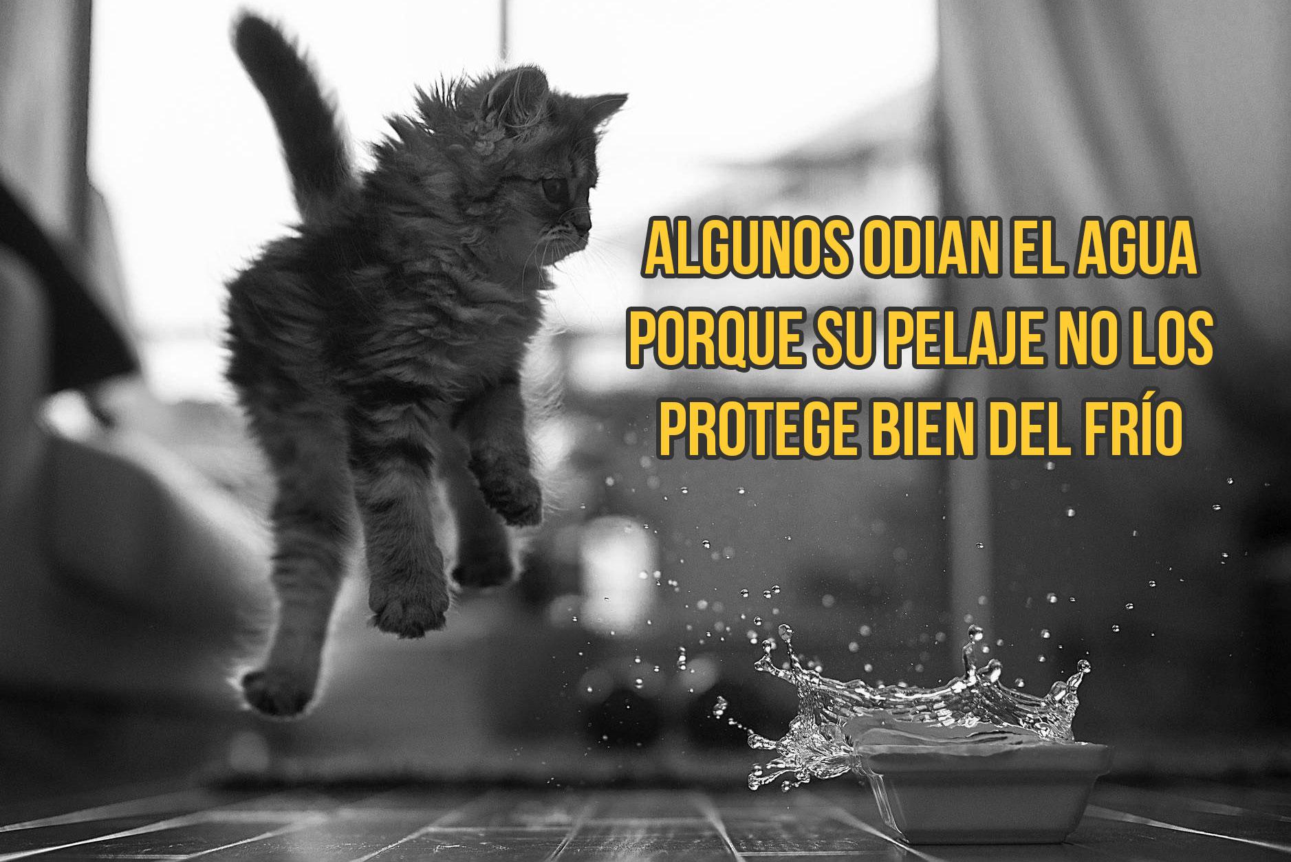 gato-curiosidad3