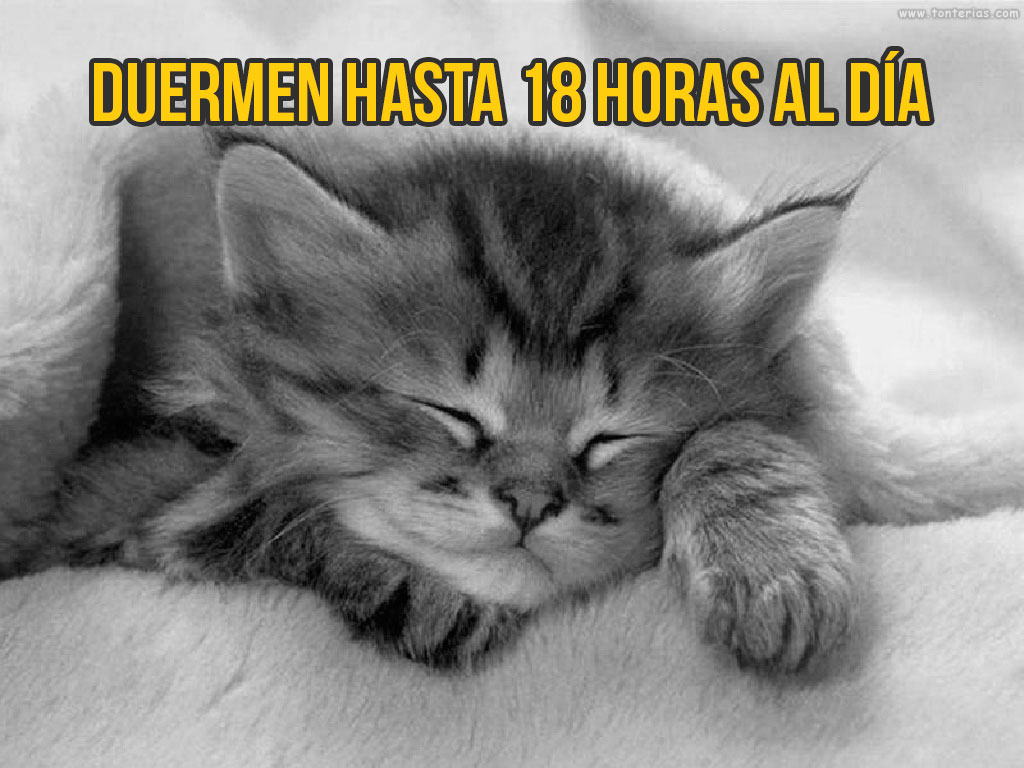 gato-curiosidad5