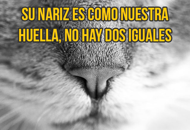 gato-curiosidad8