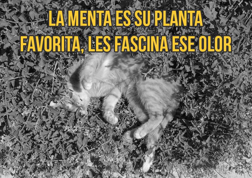 gato-curiosidad9