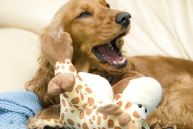 perro bostezando