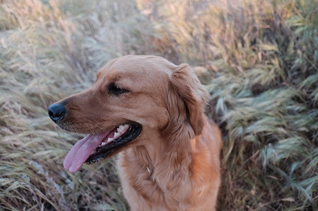perro jadeando