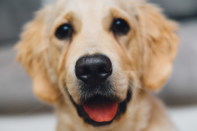 nariz humeda perro