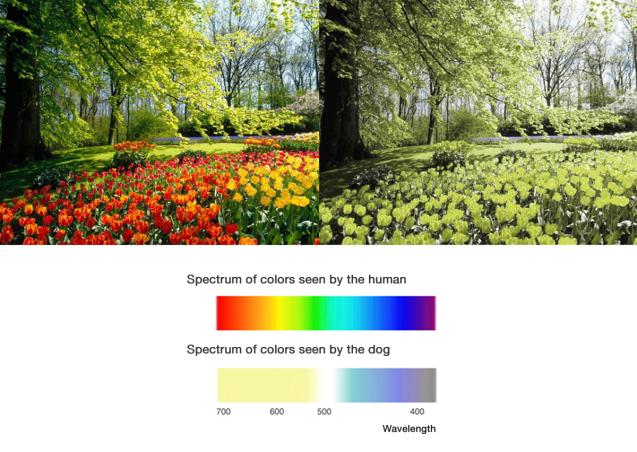 espectro colores humano y perro