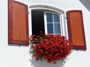 ventana-abierta-con-flores