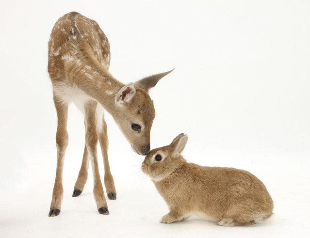 Alegoria a bambi