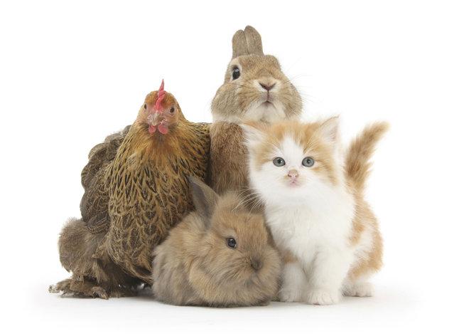 Cuatro animalitos