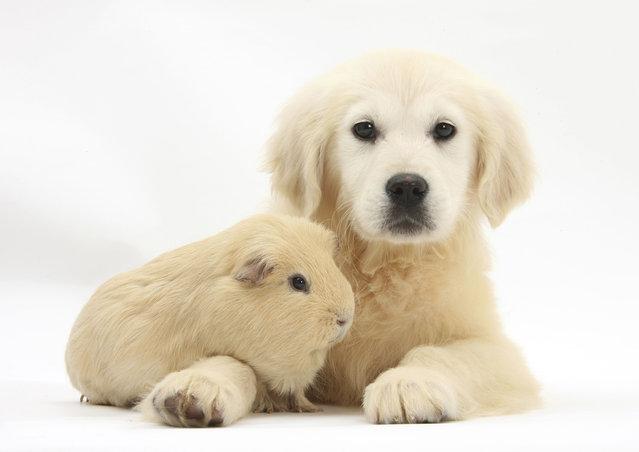 Ganster y perrito