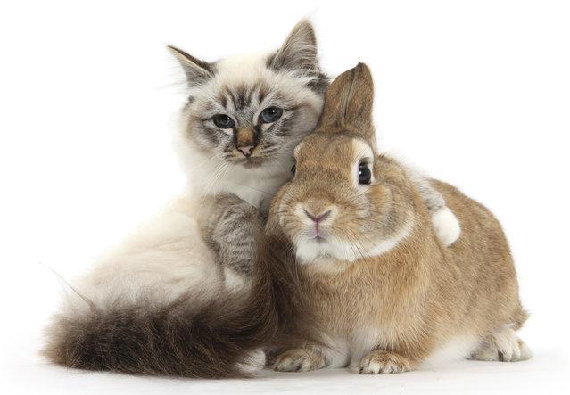 Gatito y conejo