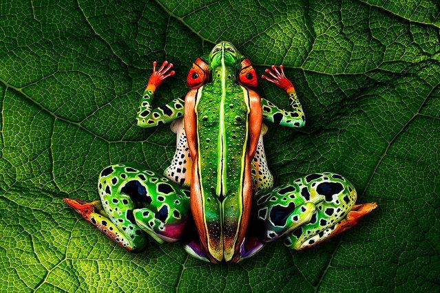 La rana tropical que le hizo mundialmente famoso.